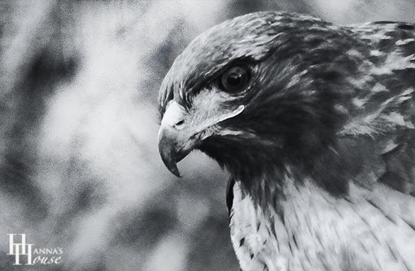 90 орел